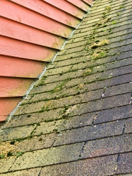 Algae and moss growth will eventually stain your roof and lead to moisture intrusion