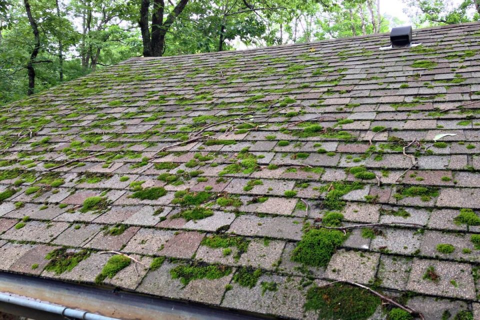 Stains on asphalt roofing shingles make a house look shabby, which detracts from its value.
