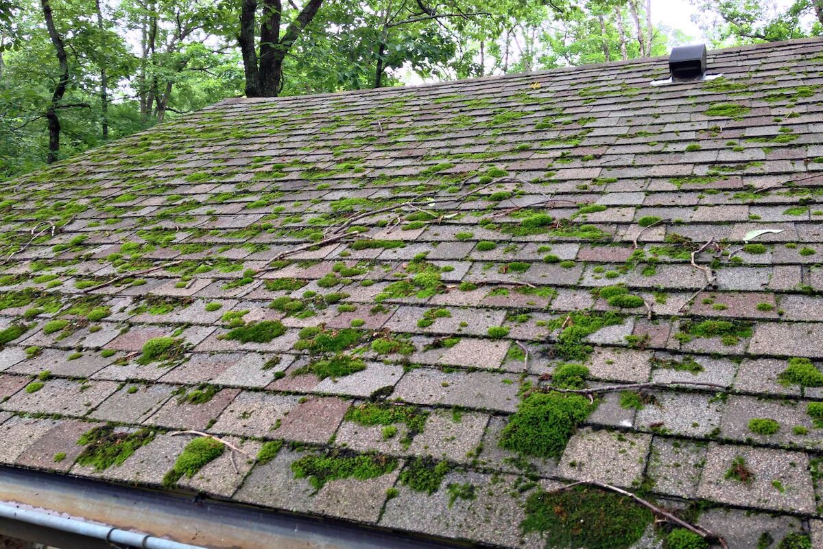 How To Clean Algae And Moss Off Asphalt Shingles Lake