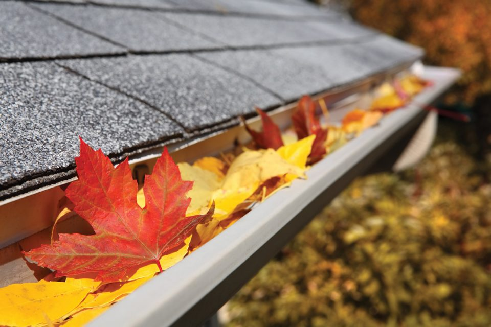 Leaves can accumulate in your gutters, preventing proper drainage